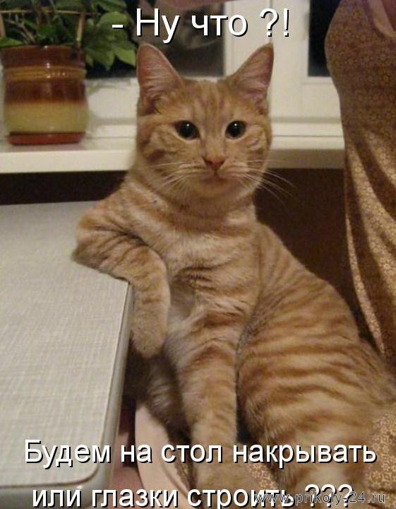 http://www.prikoly-24.ru/uploads/posts/2012-10/1349851912_kotomatricy_3-2.jpg