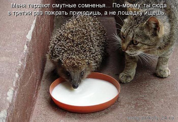 если бы кошки имели своего бога они приписали бы ему ловлю мышей
