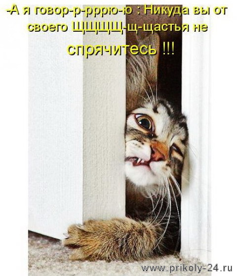 Котоматрицы (50 штук). Выпуск №27