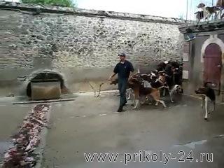 Кормёжка охотничьих собак