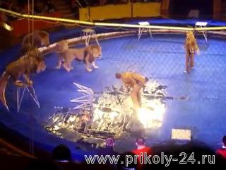 Львы атакуют дрессировщиков