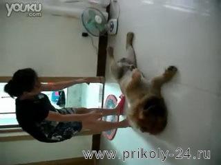 Собака отказывается мыться