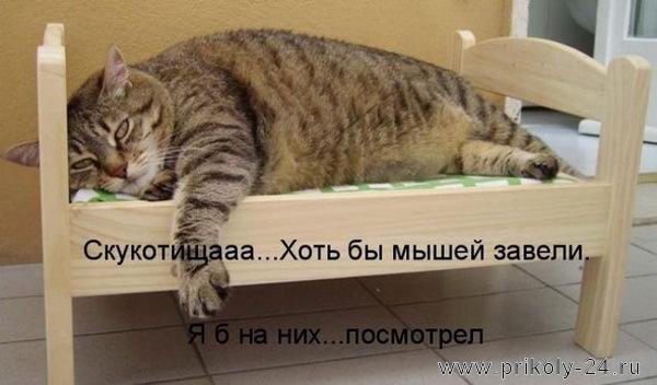 Котоматрицы (50штук). Выпуск №45