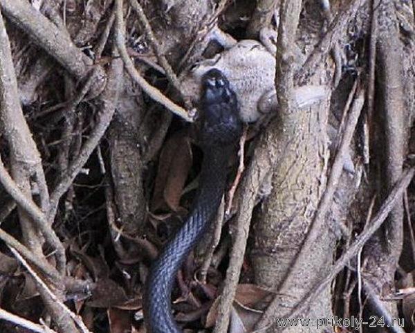 Змея против лягушки (28 фото)