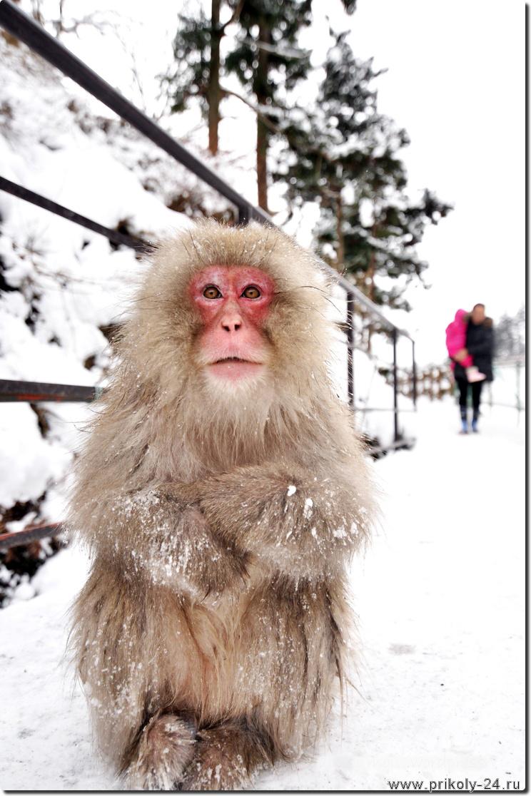 Фото сексуальные приколы обезьяны 8 фотография