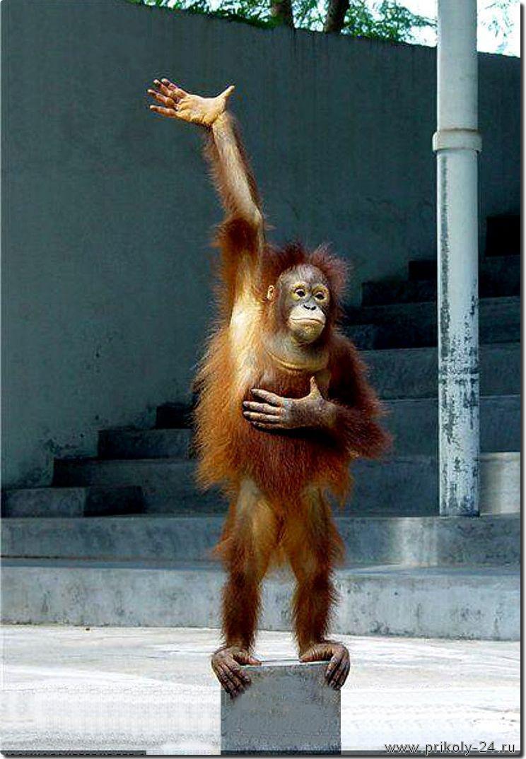 Фото сексуальные приколы обезьяны 5 фотография