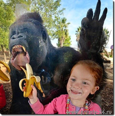 Прикольные фото обезьян. Новая подборка № 2. Смотрим фотографии обезьян.